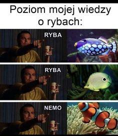Wtf Funny, Funny Memes, Hilarious, Funny Lyrics, Polish Memes, Vintage Cartoon, Creepypasta, Funny Photos, Haha