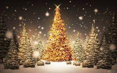 New Post gold christmas tree wallpaper Gold Christmas Tree, Beautiful Christmas Trees, Outdoor Christmas, Christmas Pictures, Christmas Time, Christmas Decorations, Merry Christmas, Christmas Movies, Xmas Trees