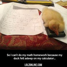 So I Can't Do My Math Homework... #lol #haha #funny
