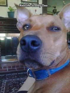 Real Scooby Doo