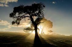 Primeiros raios da manhã | Foto por Matt Dinning