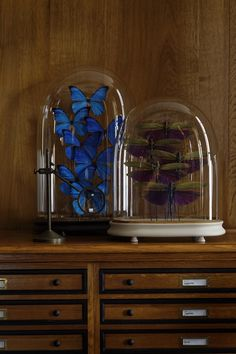 A Cabinet of Curiosities Deyrolle, photo Francis Hammond