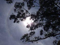 環天頂アーク 日暈  太陽のまわりに虹
