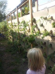 Project i.s.m. Natuur op je muur  (http://natuuropjemuur.nl/)