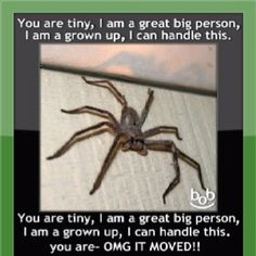 Spiders.....