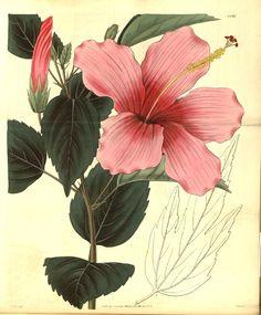 Resultado de imagem para flower