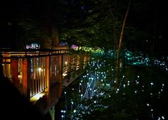 A magical artwork by Bruce Munro at Longwood Gardens