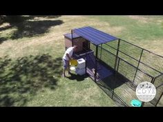 Vault Dog Food & Water Dispencer Attached to the outside of Dog Run - YouTube