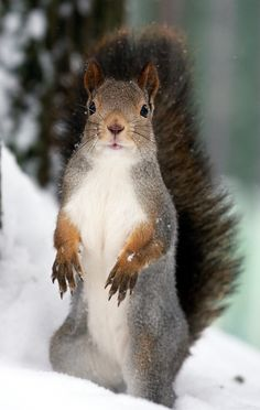 Waiting for nuts by Gleb Skrebets