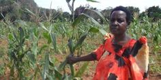 RFI English: Farm Africa helping to step up regional agricultural trade in east Africa with grain hubs and G-Soko app. People Around The World, Around The Worlds, International Development, Step Up, East Africa, Tanzania, Regional, Uganda, Spotlight