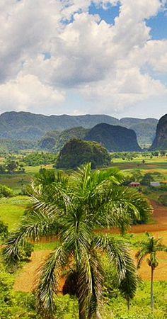 Viñales Valley . Cuba