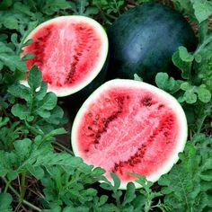Watermelon Sugar Baby Heirloom Seeds Icebox Melon Non-GMO Naturally Grown Open Pollinated Gardening Fruit Plants, Fruit Garden, Fruit Trees, Pot Plants, Edible Garden, Organic Fruit, Organic Sugar, Organic Baby, Sugar Baby Watermelon