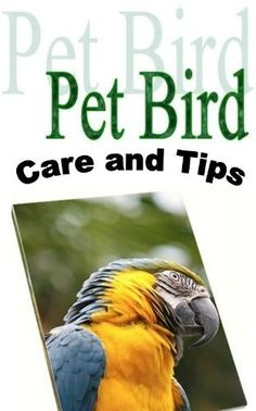 Pet Bird Care and Tips (Thinking of Adding a Pet Bird to Your Family; Do You Know How to Take Care of It? Before You Buy Your Pet Bird Read This Book.) by Margaret Hamilton. $2.99. 65 pages