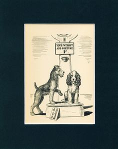 Old Dog Print 1939 Airedale Terrier English Springer Spaniel on A Weight Scale Welsh Terrier, Airedale Terrier, Fox Terrier, Terriers, Best Puppies, Best Dogs, Dog Cookies, English Springer Spaniel, Old Dogs