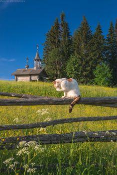 Оригинал взят у satorifoto в Кенозеро Июнь. Разноцветье трав ковром покрыло землю русского Севера. Где-то в священной роще у деревянной часовенки заливается…