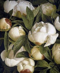 @mag.gieshep.herd  Duchess peony by botanical artist Mia Tarney #miatarney #artist #botanical #botany #buds #lux #blooms #duchess #peony #flowers #flora #pure  #artwork #design #abundance #elegant #garden #horticulture #wildflowers #natural #nature #pure #oilpainting #petals #rustic #romantic #serenebotanicaetcetera
