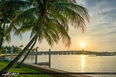 Coconut Tree at Byrant Park Sunrise Lake Worth Florida