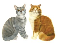 Buy illustrations and artwork by Anne Mortimer