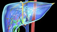 Studie linkt E621 aan leverziekten en zwaarlijvigheid