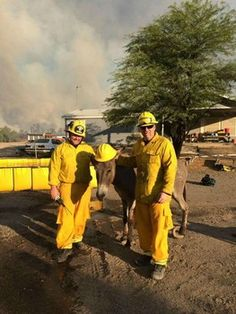 Donkey that followed firefighters out of Arizona forest fire reunited with owner