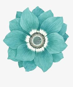 Flowers Illustration, Illustration Blume, Floral Illustrations, Turquoise Flowers, Green Flowers, Art Floral, Watercolor Flowers, Watercolor Art, Vitrine Design
