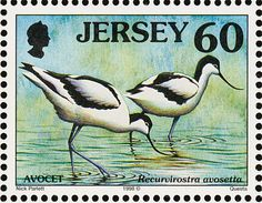 Pied Avocet stamps - mainly images - gallery format