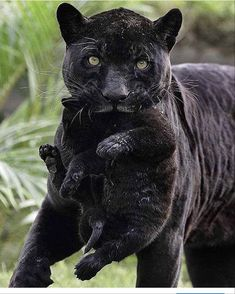 Serwis randkowy Australia Puma