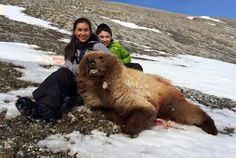 Kotzebue girl shoots grizzly bear, goes to prom