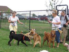 Hutchinson Dog Park - 1501 South Severance