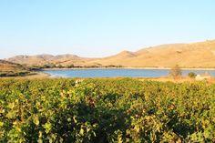 Vineyard near water reservoir, Limnos, Greece Alexandria, Harvest, Vineyard, River, Mountains, Nature, Outdoor, Greece, Wine