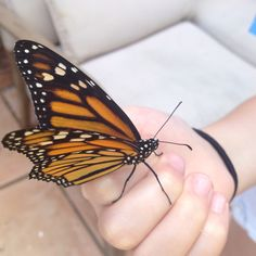 Butterfly on my grand-daughters hand....
