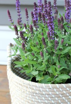 Outdoor DIY Projects and Decorating Ideas - Front Porch Basket Planter with Salvia #OutdoorExtravaganza