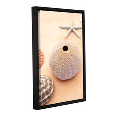 ArtWall Elena Ray 'Seashells ' Gallery-Wrapped Floater-Framed Canvas