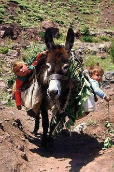 Omg too cute. this is my donkey and my kids in the future! Animals For Kids, Farm Animals, Animals And Pets, Cute Animals, Precious Children, Beautiful Children, Zebras, Cute Kids, Cute Babies