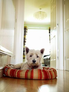 Cute terrier Woofy resting on the mat in front of the door while waiting for Meowy to be home after class.woof woof...