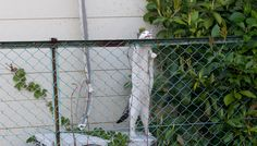 立ち見をしている猫(B-601) 猫写真-横浜 #猫写真