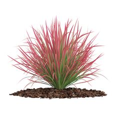 model: model of ornamental grass. Height: Compatible with max 2010 or higher and many others. Available formats: max 2010 Scanline max 2010 VRay max 2010 Corona max 2010 . Landscape Elements, Landscape Architecture, Landscape Design, Tree Psd, Plantas Bonsai, Love Background Images, Tree Shop, Tree Silhouette, Plant Illustration