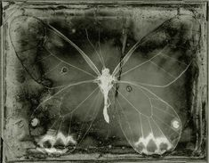 Overlays, Mazzy Star, Wet Plate Collodion, Glass Butterfly, Dark Photography, Beautiful Butterflies, Aesthetic Art, Faeries, Pretty Pictures