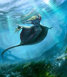 Stingray mermaid, because stingrays and sharks are closely related and stingray mermaids are rarer than shark mermaids.