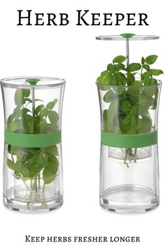 Keep delicious herbs fresher longer with the handy herb keeper. #herbs #uncommongoods #affiliate