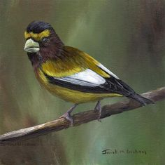 "Daily+Paintworks+-+""Evening+Grosbeak""+-+Original+Fine+Art+for+Sale+-+©+Janet+Graham"