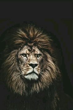 """The truth is like a lion. You don't have to defend it. Let it loose. It will defend itself"" ~St. Augustine"