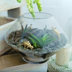 Please note as terrairums are pre-madethey are currently only available to Auckland residents. Delivery is $10 Auckland-wide due to  the fragile nature of these products.  The Jurassic Aloe Dinosaurium includes:  1 large vase (approx...  #clevercreations @The Market NZ The Fragile, Aloe, Terrarium, Auckland, Delivery, Home Decor, Nature, Products, Terrariums