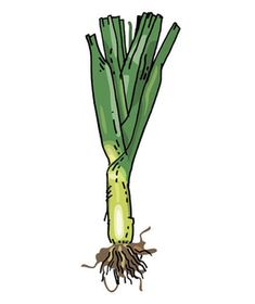 how to eat wild onions