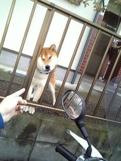 via via via via via via via via via via via via via via via via via via via via via via LOL Animals: Next Page–> Funny Dogs, Cute Dogs, Funny Animals, Cute Animals, Shiba Inu, Shiba Puppy, Dog Pictures, Funny Pictures, Japanese Dogs