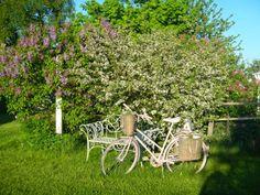Hjertetunet: Min rosa sykkel :) Outdoor Chairs, Outdoor Furniture Sets, Outdoor Decor, Home Decor, Decoration Home, Room Decor, Garden Chairs, Interior Design, Home Interiors