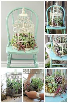 You will love these Birdcage Succulents Garden Planter Ideas and they are an easy DIY you'll love to try. Watch the video tutorial too.