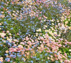 - ̗̀ plants are friends ̖́- Spring Aesthetic, Nature Aesthetic, Flower Aesthetic, Aesthetic Dark, Aesthetic Grunge, Aesthetic Vintage, Mode Poster, No Rain, Rain Fall