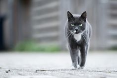 Car cars kat katten buiten outside walking lopen pet pets huisdier huisdieren .