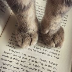 cute cat paws sitting on a book. www.kittyloversclub.com